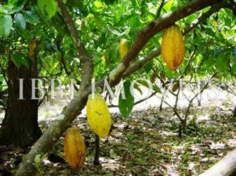 Azienda agricola di 415 ettari in Camamu