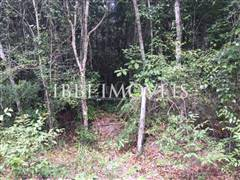 Land with great location and preserved vegetation. 3