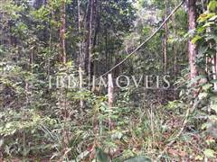 Land with great location and preserved vegetation. 5